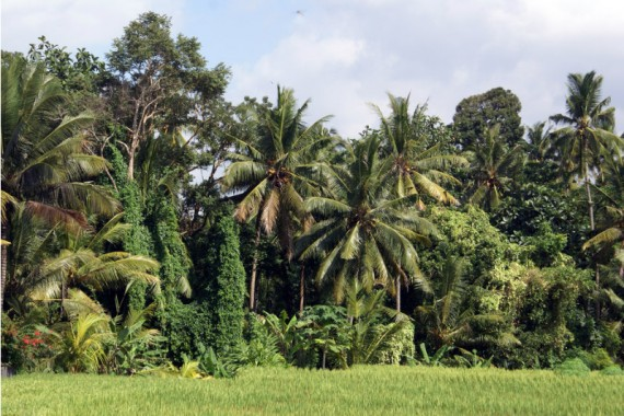 View of Ubud: Perfect For Digital Nomads